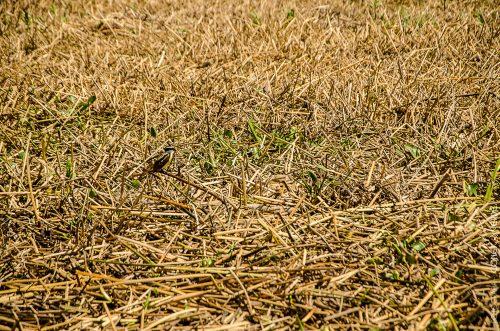 ave-isla-paulino-argentina-1-conejo-verde