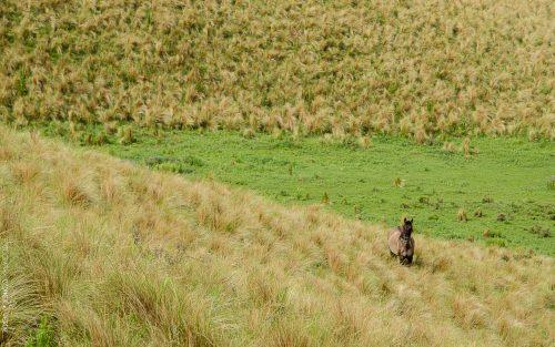 campo-cordoba-argentina-1-conejo-verde