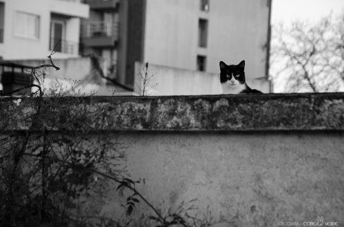 gato-batman-la-plata-argentina-1-conejo-verde