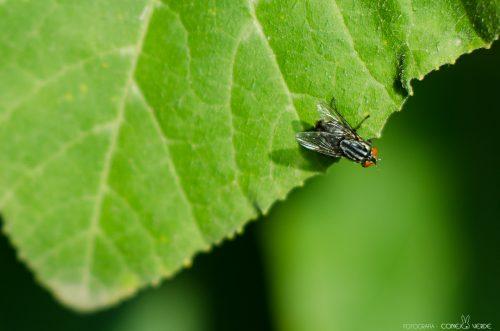 insecto-argentina-3-conejo-verde
