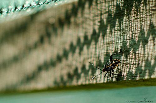 insecto-argentina-4-conejo-verde