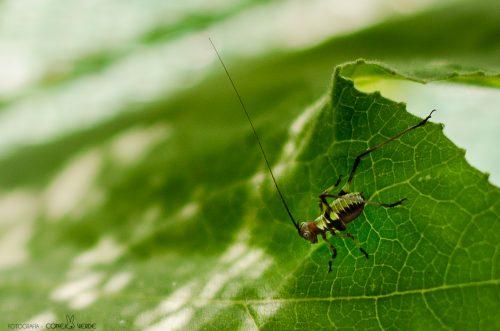 insecto-argentina-5-conejo-verde