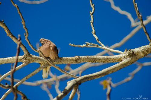 paloma-la-plata-argentina-1-conejo-verde